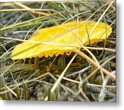Aspen Leaf After The Rain Metal Print by Sara  Mayer
