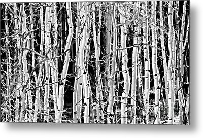 Metal Print featuring the photograph Aspens by Clare VanderVeen