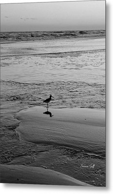 At Twilight In Black And White Metal Print by Suzanne Gaff
