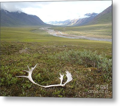 Atigun Valley Caribou Shed Metal Print by Adam Owen