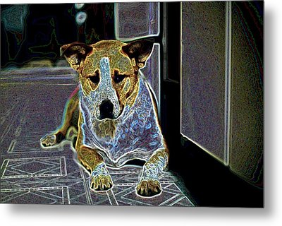 Australian Cattle Dog Boxer Mix Metal Print by One Rude Dawg Orcutt