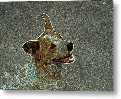 Australian Cattle Dog Mix Metal Print by One Rude Dawg Orcutt