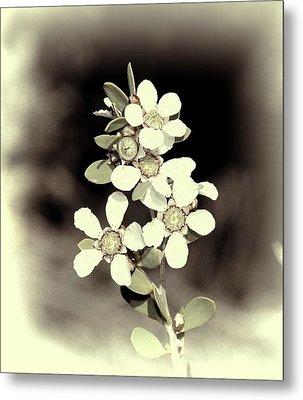 Australian Coastal Wildflowers Metal Print