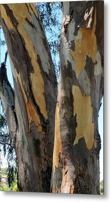 Metal Print featuring the photograph Australian Tree by Roberto Gagliardi