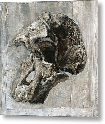 Australopithecus Africanus Skull Metal Print by Kennis And Kennismsf