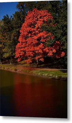 Autum Color Metal Print