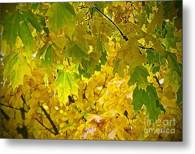 Autumn - Mellow Time Metal Print by Gwyn Newcombe