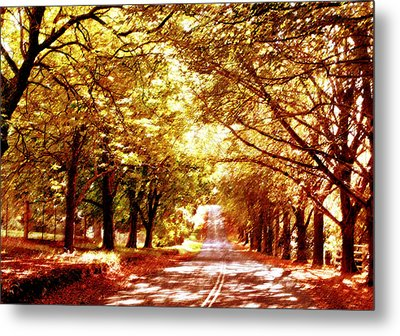 Autumn Avenue Metal Print by Linde Townsend