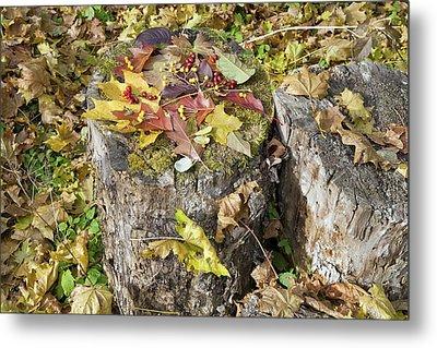 Autumn Berries And Leaves  Metal Print by Aleksandr Volkov
