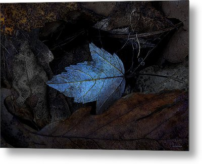 Autumn Blue Metal Print by Ron Jones
