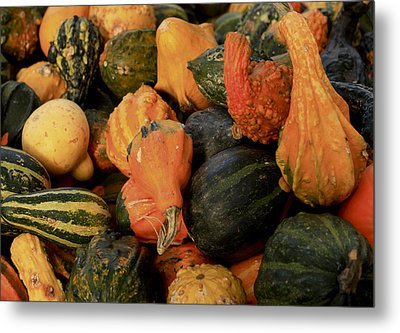 Metal Print featuring the photograph Autumn Bounty by Patrice Zinck
