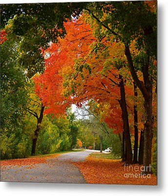 Autumn Canopy Metal Print by Sue Stefanowicz