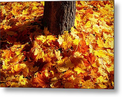 Autumn Carpet Metal Print by Linda Edgecomb