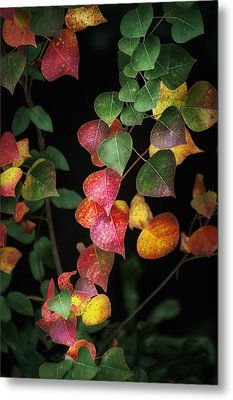 Autumn Color Metal Print by Brenda Bryant