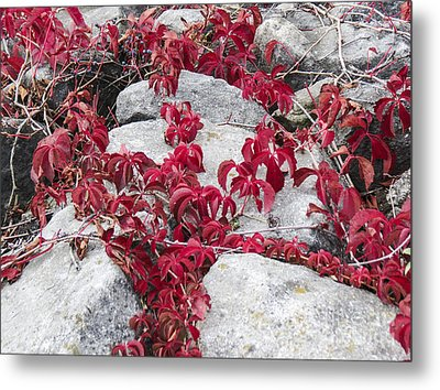 Autumn Color Is Red Metal Print by Darleen Stry