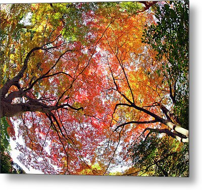 Autumn Color Metal Print by Shuya Seno Photography
