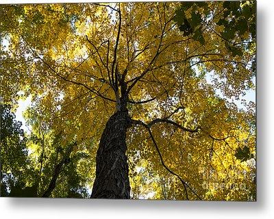 Autumn Colors Metal Print by Darleen Stry