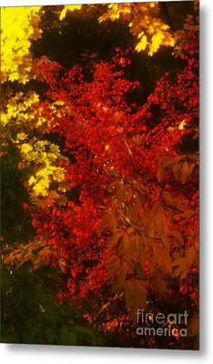 Autumn Colors Metal Print by Jeff Breiman