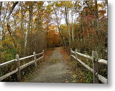 Autumn Metal Print by Diane Giurco