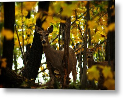 Autumn Doe Metal Print by Scott Hovind