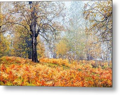 Autumn Dreams Metal Print by Evgeni Dinev