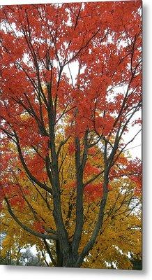 Autumn Duel Metal Print by Todd Sherlock