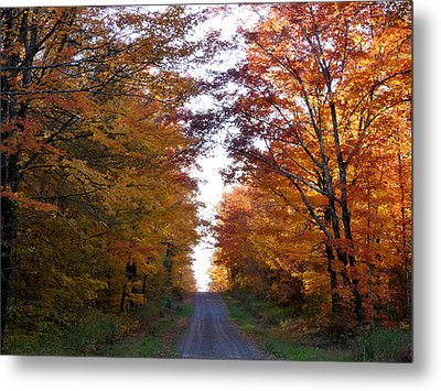 Autumn Fire Metal Print by Terry Eve Tanner