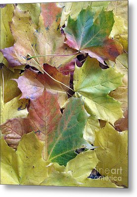 Autumn Foliage Metal Print by Ausra Huntington nee Paulauskaite