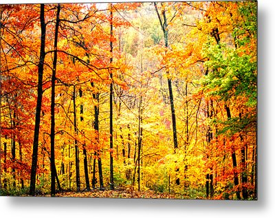 Metal Print featuring the photograph Autumn Forest by Randall Branham