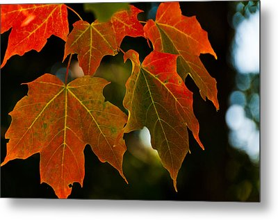 Metal Print featuring the photograph Autumn Glory by Cheryl Baxter