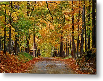 Autumn Gold Metal Print by Rodney Campbell