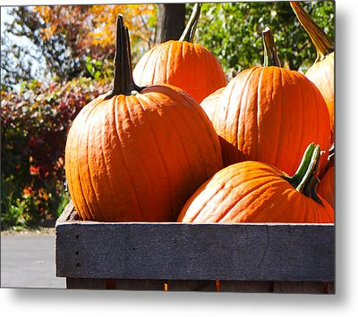 Autumn Harvest Metal Print by Julia Wilcox