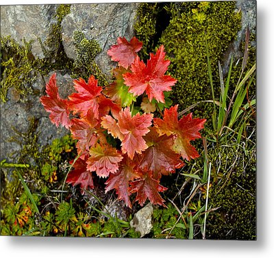 Autumn In Canada Metal Print by Sylvia Hart