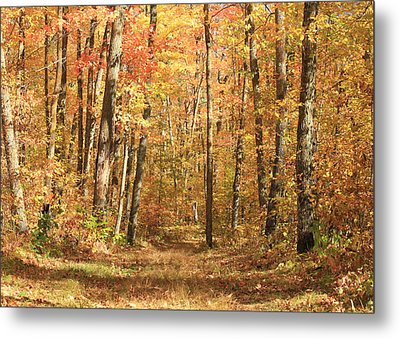 Metal Print featuring the photograph Autumn In Minnesota by Penny Meyers