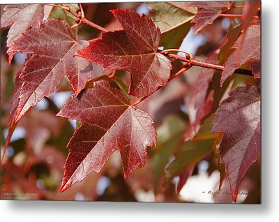 Autumn In My Back Yard Metal Print by Mick Anderson