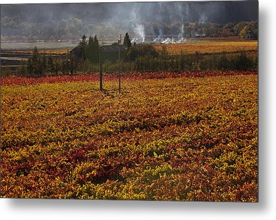 Autumn In Napa Valley Metal Print by Garry Gay