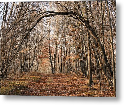 Metal Print featuring the photograph Autumn In The Woods by Penny Meyers