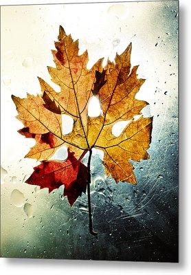 Autumn Leaf Metal Print by Ivan Vukelic