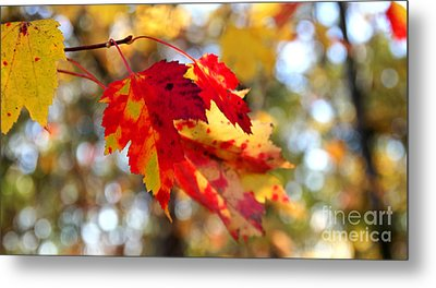 Autumn Leaves Metal Print by Adrian LaRoque