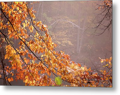 Metal Print featuring the photograph Autumn Leaves And Fog by Tom Singleton
