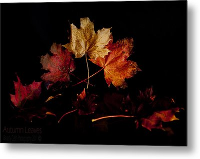 Metal Print featuring the photograph Autumn Leaves by Beverly Cash