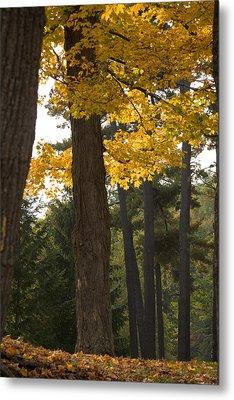 Autumn Leaves Metal Print by Darleen Stry