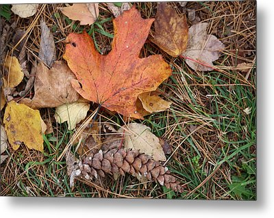 Metal Print featuring the photograph Autumn Leaves by Donna  Smith