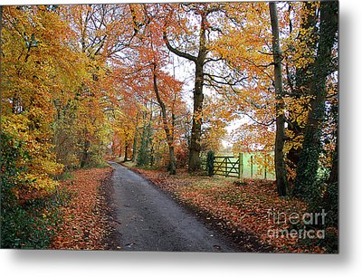 Autumn Leaves Metal Print by Harold Nuttall