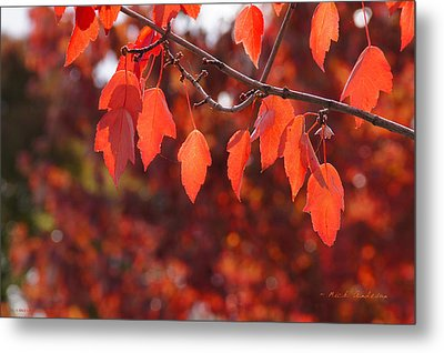 Autumn Leaves In Medford Metal Print by Mick Anderson