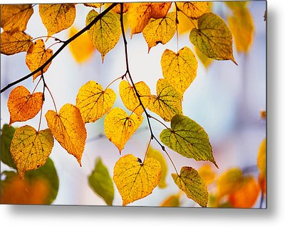 Autumn Leaves Metal Print by Jenny Rainbow