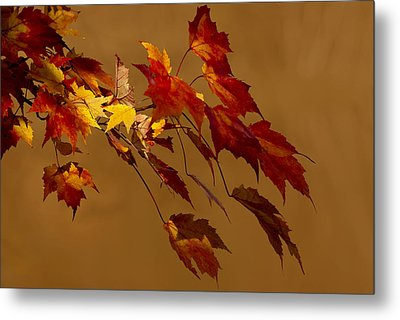 Metal Print featuring the photograph Autumn Leaves by Judy  Johnson