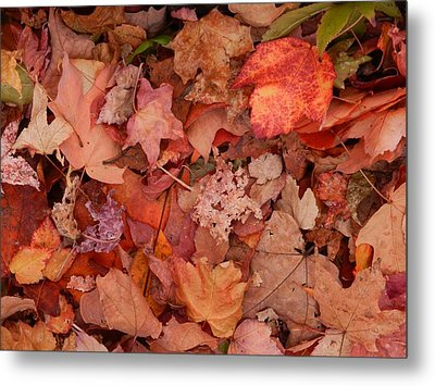 Metal Print featuring the photograph Autumn Leaves by Karen Molenaar Terrell