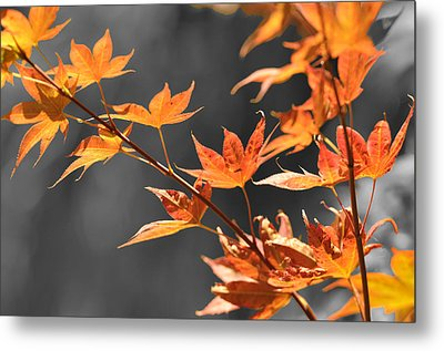 Metal Print featuring the photograph Autumn Leaves  by Sandy Fisher