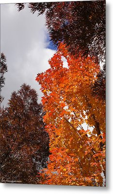 Autumn Looking Up Metal Print by Mick Anderson